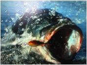 Su Nido Inn - Things to do in Ojai fishing
